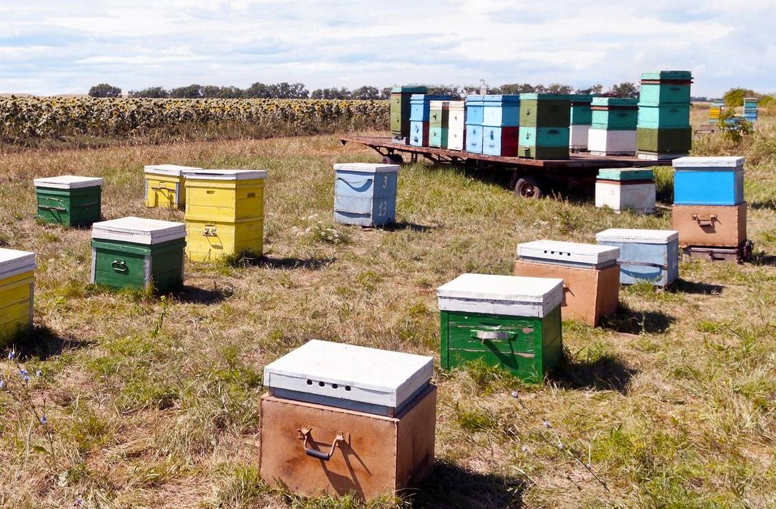 bee community 2
