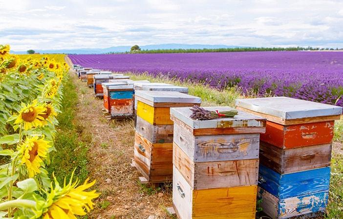 community bee garden